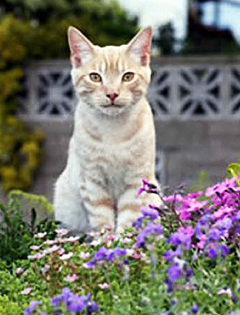 Cat_in_Flowers_1